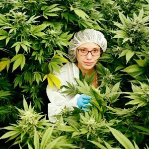Frauen in der Cannabis Industrie