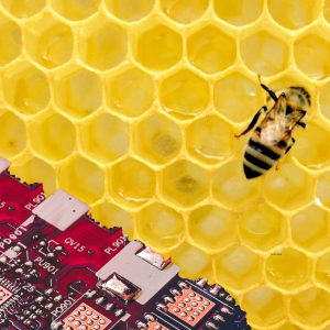 Bienentechnologie Bee Technology, High Tech, Israel, Startup Start Up, High Tech Szene