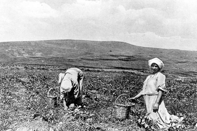 Israel, 1912, Pioniere