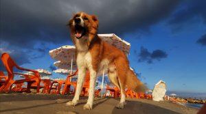 Cleos Hund, Israels Hunde