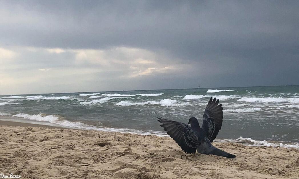 Taube, Israel, Strand, Hoffnung