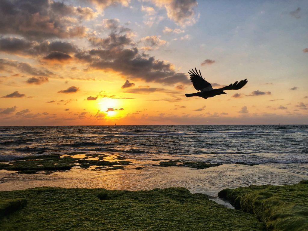 Vogel, Himmel, Israel, Freiheit